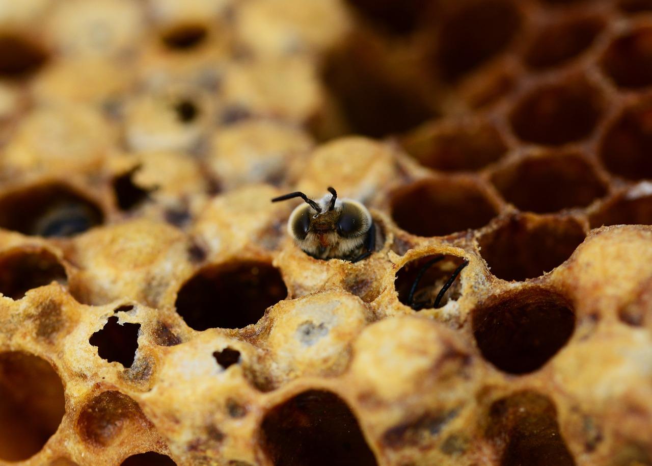 das leben der biene honigkuss honig aus leipzig. Black Bedroom Furniture Sets. Home Design Ideas